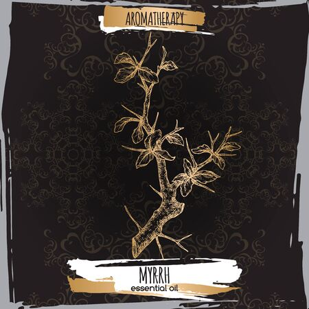 Commiphora myrrha aka common myrrh sketch on elegant black lace