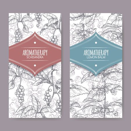 Two labels with Lemon balm aka Melissa officinalis and Schisandra chinensis sketch on elegant lace Ilustracja