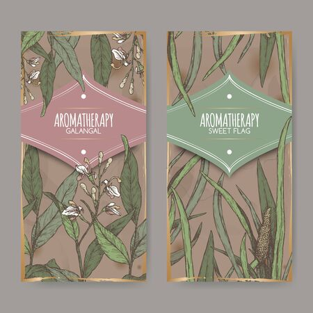 Two color labels with Acorus calamus or sweet flag and Alpinia galanga or greater galangal sketch on vintage