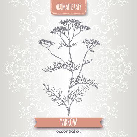 Yarrow aka Achillea millefolium sketch on elegant lace background. Great for traditional medicine, perfume design, cooking or gardening. Çizim