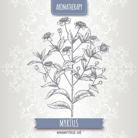 Common myrtle aka Myrtus communis sketch on elegant lace background. Çizim