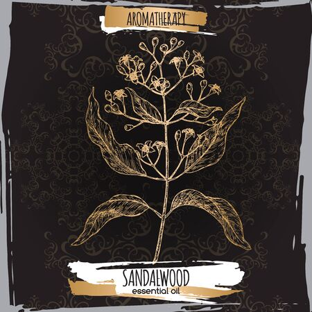 Indian sandalwood aka Santalum album sketch on black lace Иллюстрация
