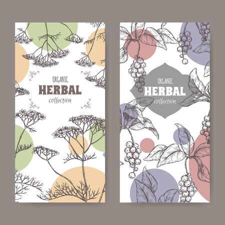 Two labels with Yarrow and Schisandra or magnolia vine sketch. Herbal collection series. Çizim