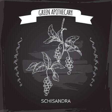 Schisandra aka Schisandra chinensis or magnolia vine sketch on blackboard background. Green apothecary series. Çizim