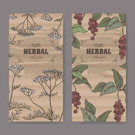 Two color labels with Yarrow and Schisandra or magnolia vine sketch. Herbal collection series.