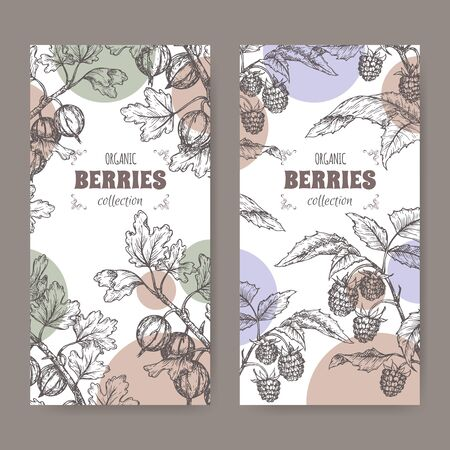 Set of two lables with Red raspberry aka Rubus idaeus and Gooseberry aka Ribes uva-crispa branch sketch. Berry fruits series. Great for traditional medicine, perfume design, cooking or gardening.