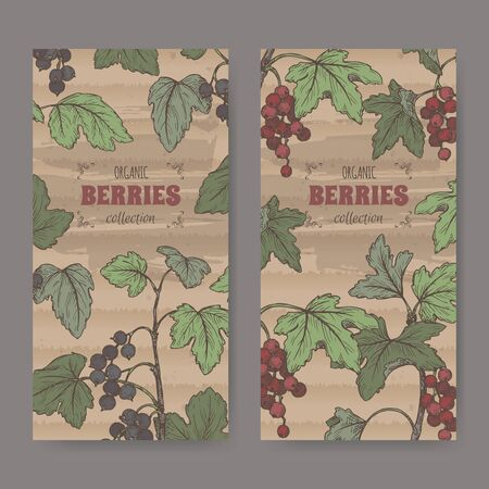 Set of two color labels with Black currant aka Ribes nigrum and Red currant aka Ribes rubrum sketch. Vector Illustratie