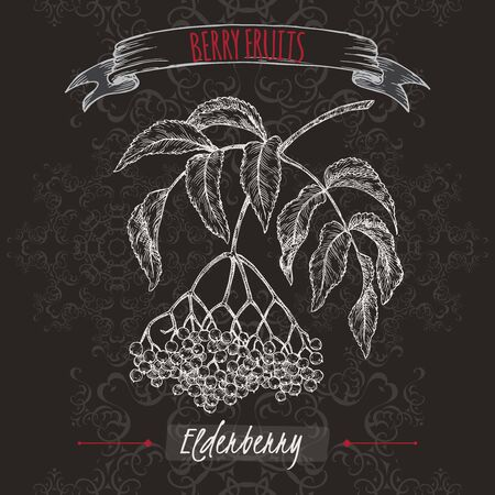 Sambucus aka elderberry branch sketch on black background. Berry fruits series. Great for traditional medicine, perfume design, cooking or gardening. Vettoriali
