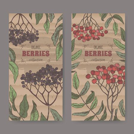 Set of two color labels with Sambucus aka elderberry and Rowan aka Sorbus aucuparia branch sketch. Berry fruits series.