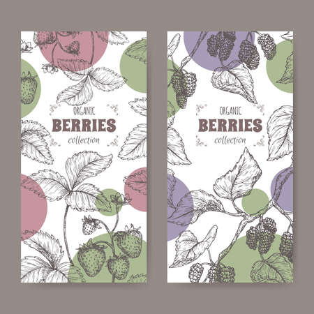 Two labels with garden strawberry aka Fragaria ananassa and Black mulberry aka Morus nigra branch sketch. Illusztráció