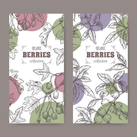 Two labels with Hawthorn aka Crataegus and Blackthorn aka Prunus spinosa branch sketch. Berry fruits series.