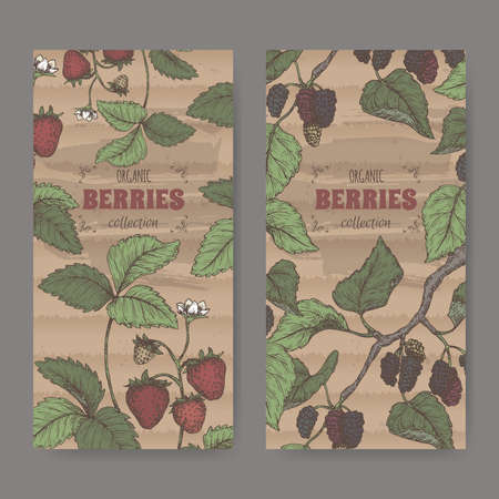 Two labels with garden strawberry aka Fragaria ananassa and Black mulberry aka Morus nigra branch color sketch.