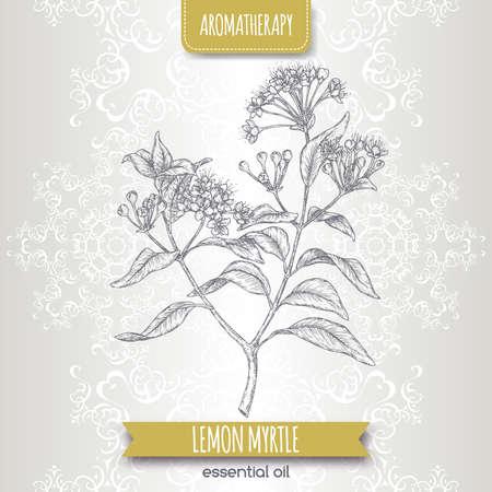 Lemon myrtle aka Backhousia citriodora sketch on elegant lace background. Vettoriali