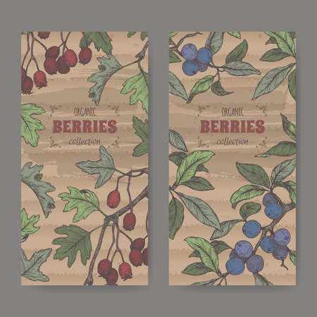 Two labels with Hawthorn aka Crataegus and Blackthorn aka Prunus spinosa branch color sketch. Berry fruits series.