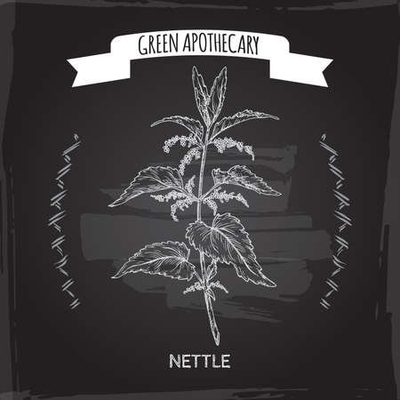Urtica dioica aka common nettle sketch on black background. Green apothecary series.