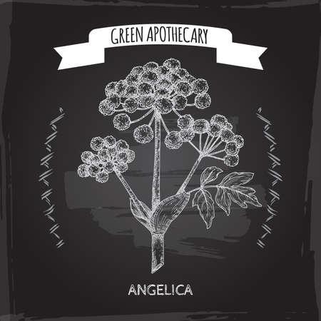 Angelica archangelica aka garden angelica sketch on black background. Green apothecary series.