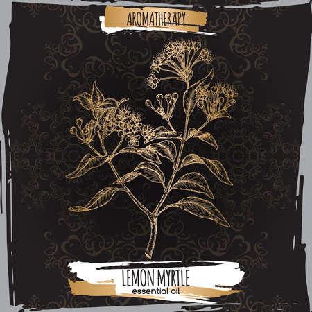 Lemon myrtle aka Backhousia citriodora sketch on black background.
