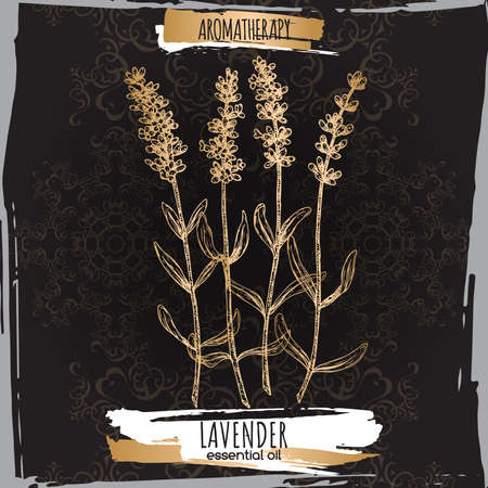 Lavender aka Lavandula angustifolia sketch on black background.