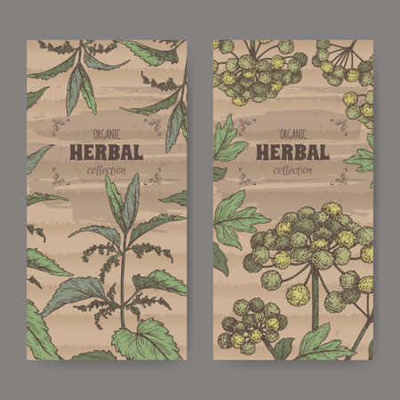 Two labels with Urtica dioica aka common nettle and Angelica archangelica aka garden angelica color sketch.