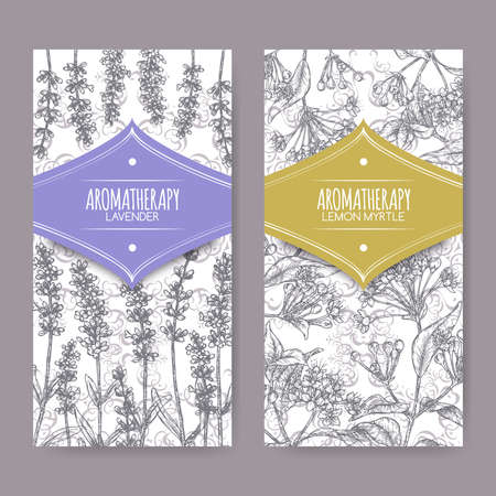 Two labels with Lavender aka Lavandula angustifolia and Lemon myrtle aka Backhousia citriodora sketch. Illustration