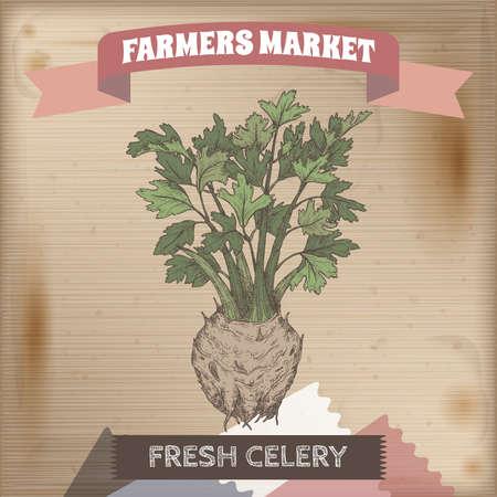 Apium graveolens aka celery color sketch on vintage background. Farmers market series.