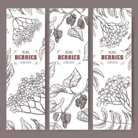 Set of three labels with Sambucus, Rowan and Mulberry branch sketch. Berry fruits series.