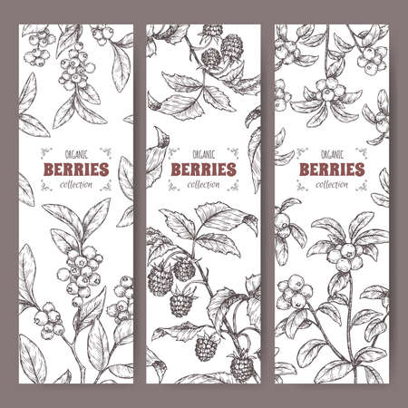 Set of three labels with blueberry, cranberry and raspberry branch sketch.