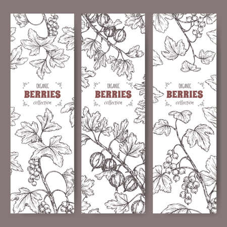 Set of three labels with Black currant, Red currant and Gooseberry sketch. Berry fruits series.