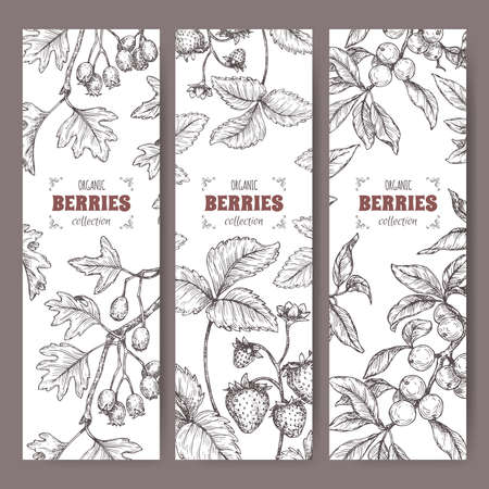 Three labels with Hawthorn, Blackthorn and Garden Strawberry branch sketch. Berry fruits series. Illustration