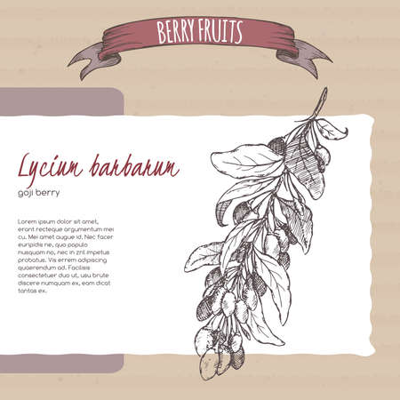 Lycium barbarum aka Goji berry branch sketch on cardboard background. Berry fruits series. 矢量图像