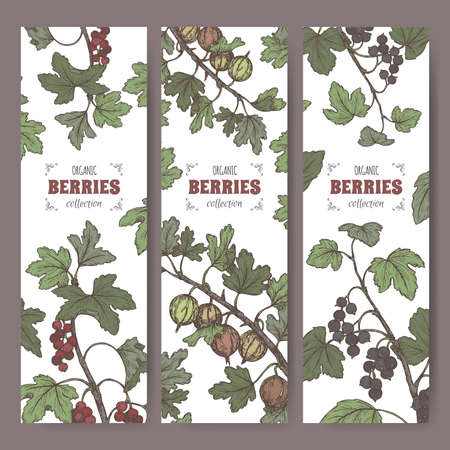 Set of three labels with Black currant, Red currant and Gooseberry color sketch. Berry fruits series. Vektorgrafik