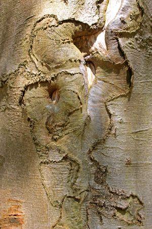 knothole: tree trunk photographed in April 2009 near Frankfurt Main, Germany