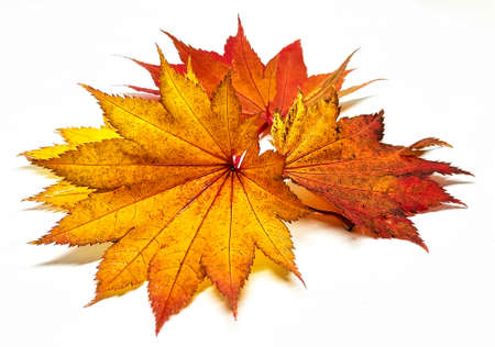 Colored leaf in autumn