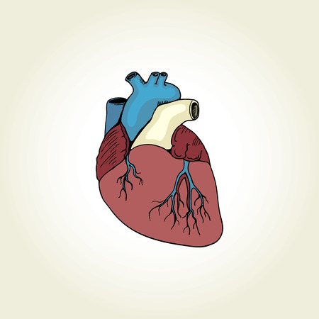 ventricle: anatomical image of the heart in a retro style
