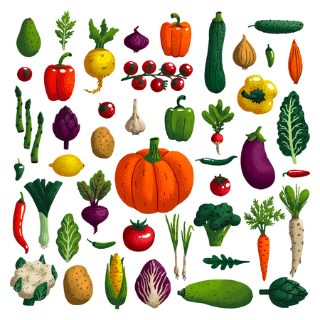 Vegetables set. Variety of decorative vegetables with grain texture isolated on white. Collection farm product for restaurant menu, market label. Vector illustration