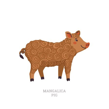 Rare animals collection. Mangalica pig. Unusual Pig breed having a long curly coat like a sheep. Flat style vector illustration isolated on white background Ilustração