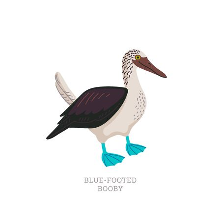 Rare animals collection. Blue-footed booby. Tropical marine bird with bright blue feet. Flat style vector illustration isolated on white background