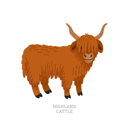 Rare animals collection. Highland cattle. Scottish breed of long-haired cow. Flat style vector illustration isolated on white background