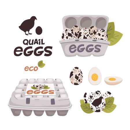 Quail eggs in cardboard boxes and Fresh farm eggs logo. Organic farm product, eco. Cooking ingredient. Flat style vector illustration