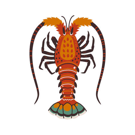 Spiny lobster, langouste or lobster or with long antennae and without claws. Simple Colorful vector illustration in flat cartoon style.
