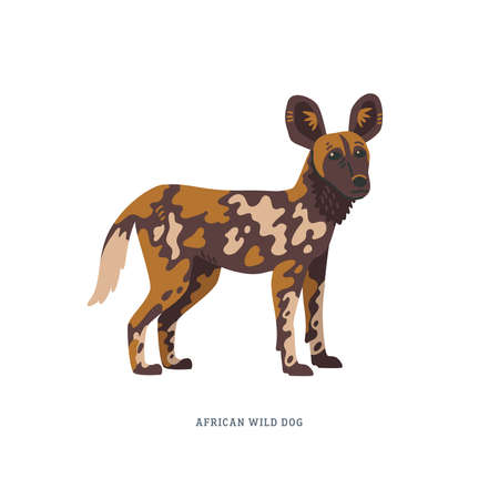 African wild dog or Lycaon pictus, also called the painted wolf or Cape hunting dog. Simple Colorful vector illustration in flat cartoon style on white background.