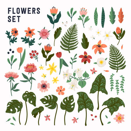 Flower set. Collection of wild and garden blooming flowers, decorative floral design elements. Vector illustration in flat cartoon style on white background