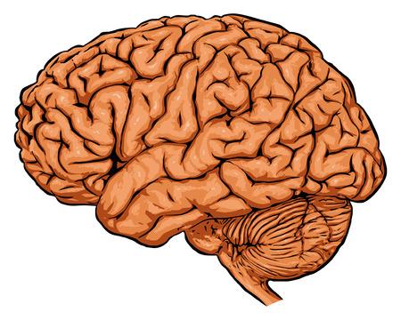 mozek Ilustrace
