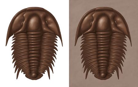 Trilobite illustration