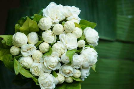 Beautiful White Jasmine Flowers bouquet Stock Photo - 30654008