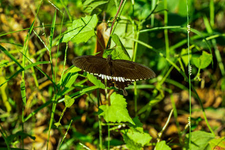 In a bright day and white and black butterflies perched on creeping trees