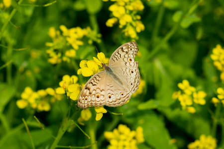 Mustard flowers on butterfly with many colors top of it