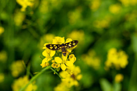 From Rape or Colbaga or White mustard and Bee colleting honey