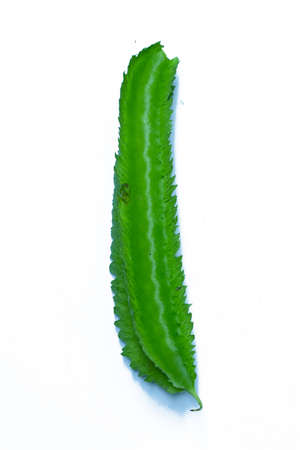 Green vegetable or Green Goa-bean or Leguminosae on white background