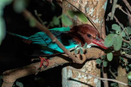 Fishing or kingfisher birds are hiding in the branches of trees to hunt